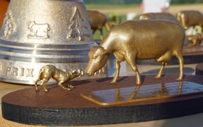 Concours International de chien de troupeau sur bovin